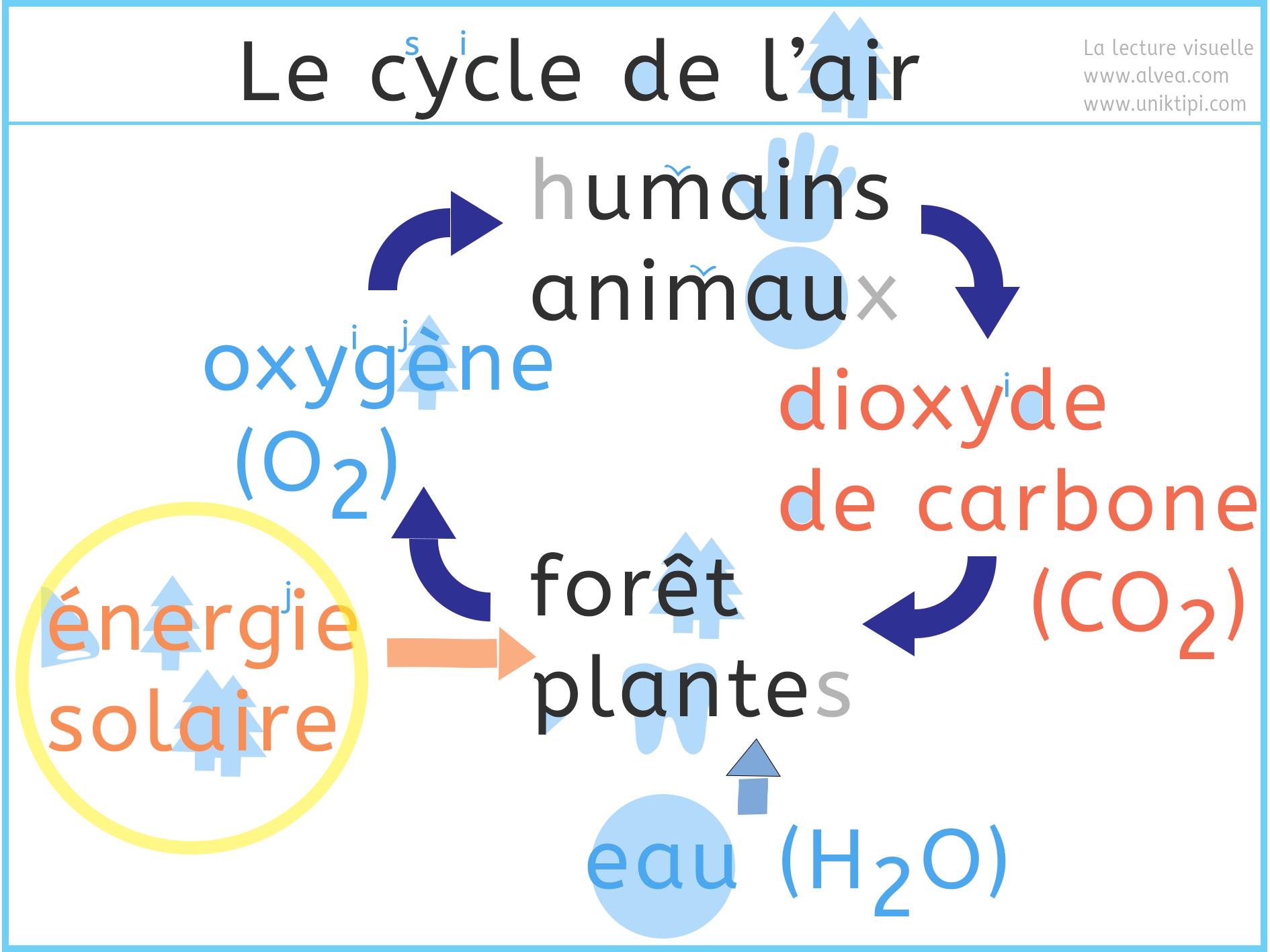 Le cycle de l'air avec la photosynthèse expliqué en lecture visuelle